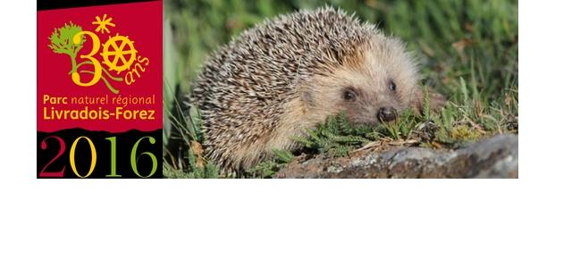 Contribuez à l'enquête sur le Hérisson d'Europe du 1er juin au 30 octobre 2016 sur le Parc Livradois-Forez. L'objectif de cet inventaire est d'estimer la population de hérisson du Livradois-Forez […]